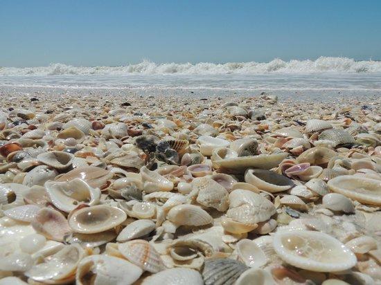 Fort Myers Beach, FL: Beach ,, shell view...