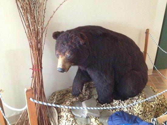 Cumming Nature Center: Cumming black bear display