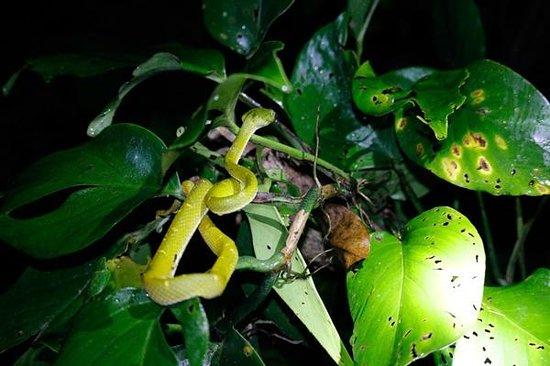 Monteverde Wildlife Refuge : Do NOT pet the wildlife! (Very poisonous!)