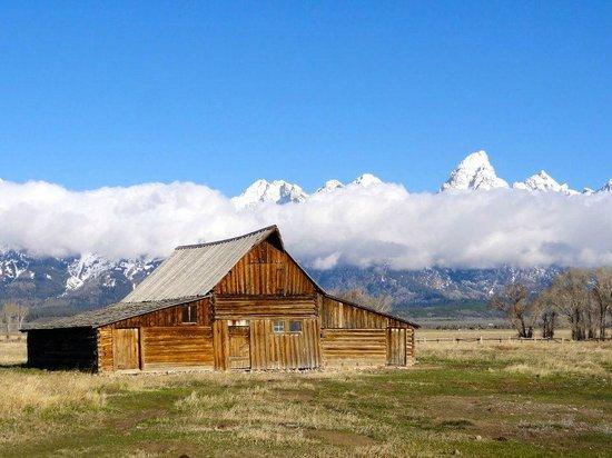 Grizzly Country Wildlife Adventures : Mormon Row