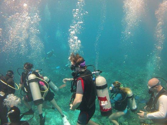 Belize Underwater: Drop in