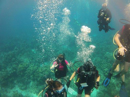 Belize Underwater: Drop at Glovers Reef, Middle Reef