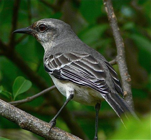 Tobago Cays: Bird in Baradel Island
