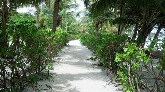 White Sands Cove Resort : Ocean front path