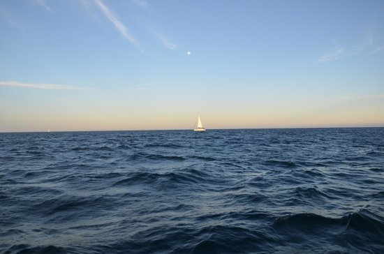 Cabo Sails: Sailboat