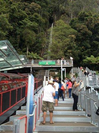 Activity Tours Australia : SCENIC WORLD