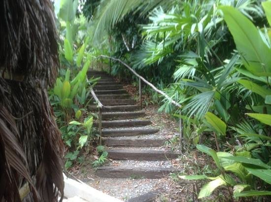 Lapa Rios Ecolodge Osa Peninsula: start of steps from room