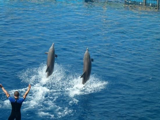 Oceanografic: show dos golfinhos