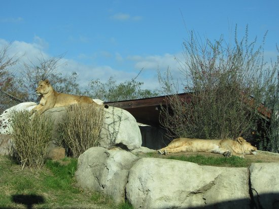Dallas Zoo: View from the Serengeti Cafe