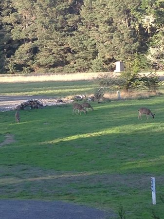 Brewery Gulch Inn : Deer outside our rooms window