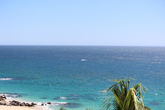 Hilton Los Cabos Beach & Golf Resort : Whale watching from room balcony