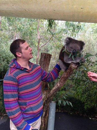 Cleland Wildlife Park : Petting the Koala