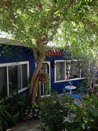 Garden Cottage B & B: shade tree in garden