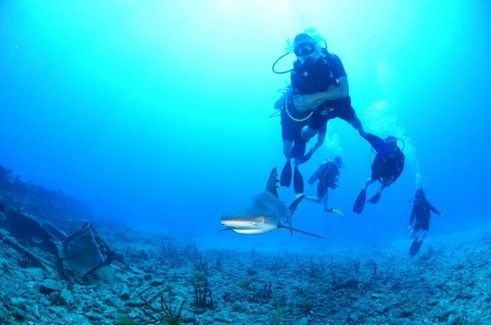 Ocean Explorers Dive Center : Diving with the residents