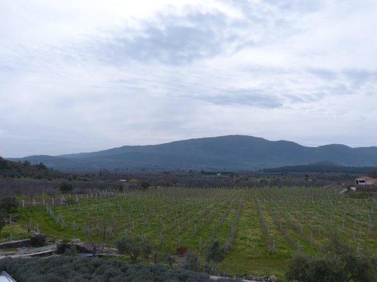 Yedi Bilgeler: View of the vineyards
