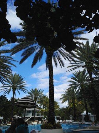 The Raleigh Miami Beach: 2