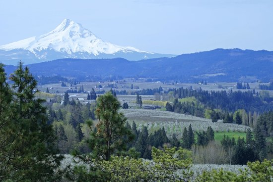 Mount Hood : View from Panorama Point in mid April