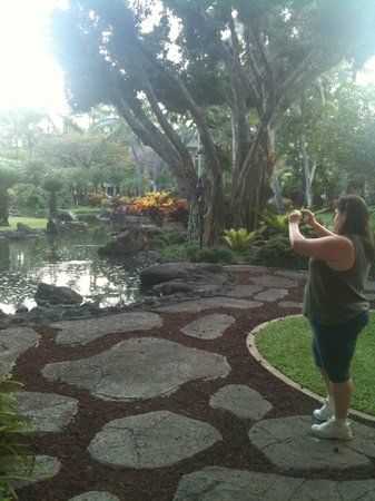 Kaua'i Marriott Resort: Coi pond