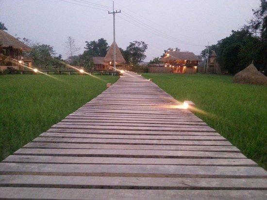 Vieng Tara Villa: Ricefm Field Farm