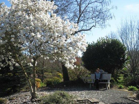 Oregon Garden Resort : More trees blossoming.