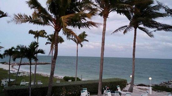 Continental Inn: palm trees