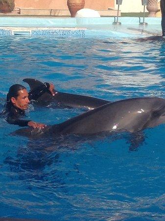 Dolphina Park : Agosto2013