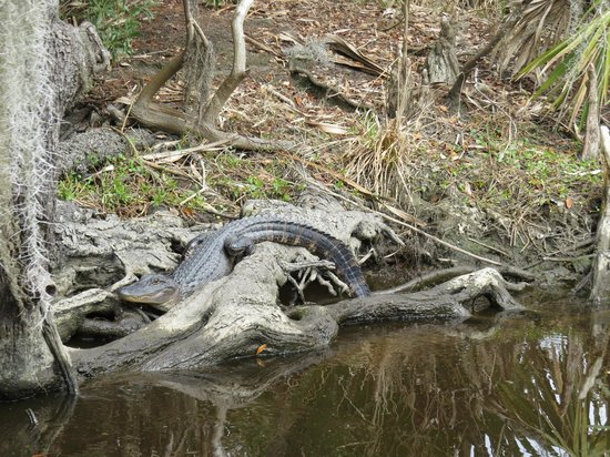 Airboat Adventures : Lazy Gator