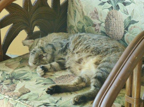 "Hideaways at Palm Bay: ""Fat Cat"""