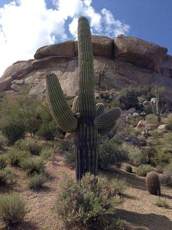 Boulders Resort & Spa, Curio Collection by Hilton: Cactus & boulders