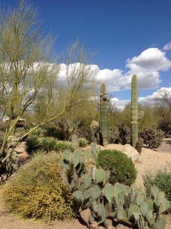 Boulders Resort & Spa, Curio Collection by Hilton: Desert around The Boulders