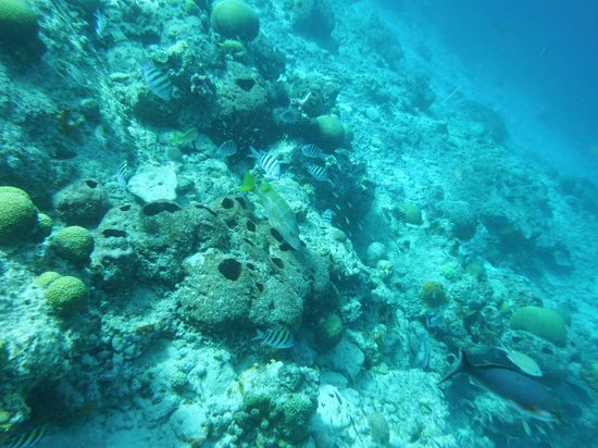 Wannadive Bonaire: fish and coral