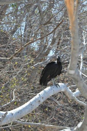 Charlie's Adventure Tours : vulture