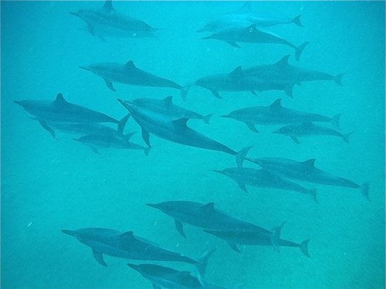 Z Tourz : Spinner Dolphins joined us for our snorkel