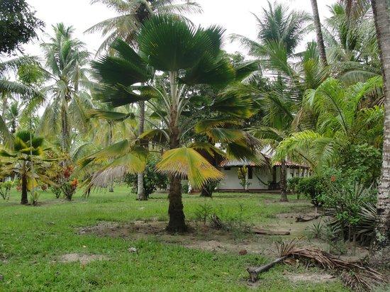 Villa Guaiamu Hotel: Lindos coqueiros
