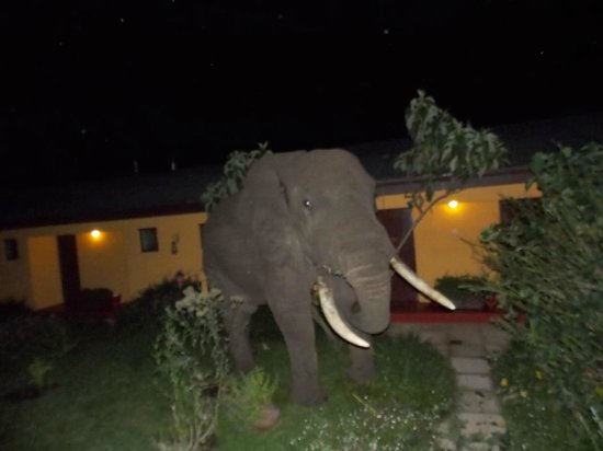 Ngorongoro Rhino Lodge: He stayed in the courtyard of the Lodge for about an hour