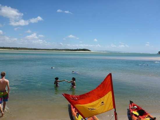Kayak Noosa: Snorkelling in the river with fish friends!