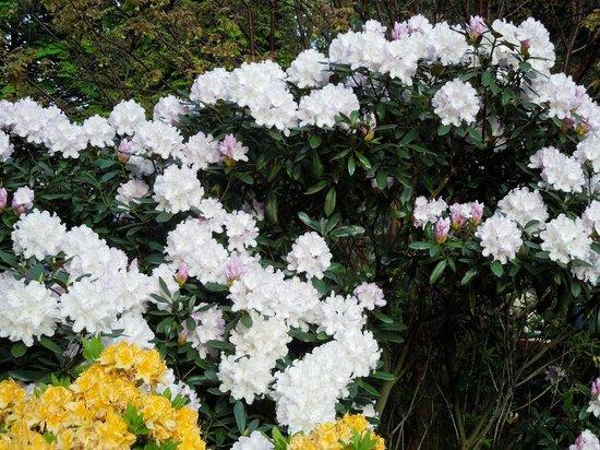 Jardines de la Calle de los Príncipes: May Floral 3