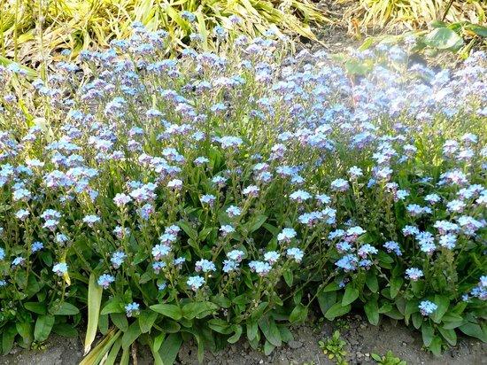 Jardines de la Calle de los Príncipes: May Floral 2