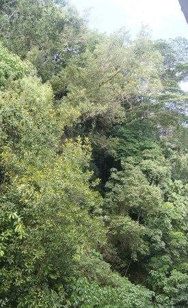 Hsiang Garden Hotel: Jungle View