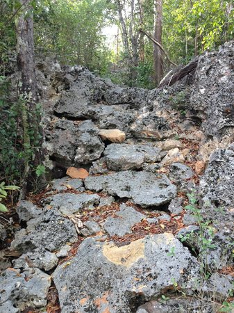 Parrot Preserve: Sharp, rocky, and uneven.