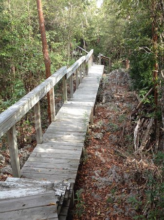 Parrot Preserve: Cool boardwalk: narrow, lots of steps and turns