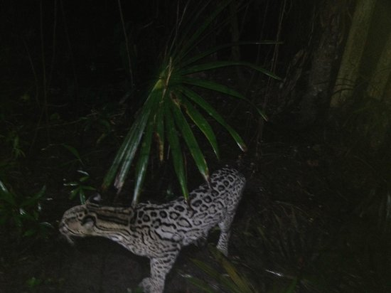 Belize Zoo Jungle Lodge/Tropical Education Center: Night Tour at the Zoo
