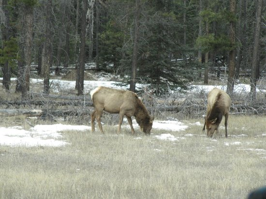 SunDog Transportation and Tours: some elk