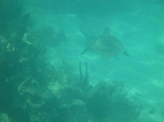 Yal-ku Lagoon: Akumal (Turtle Bay)