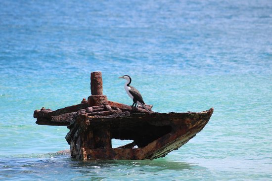 Castaways Moreton Island: Shag on bulwer Wrecks