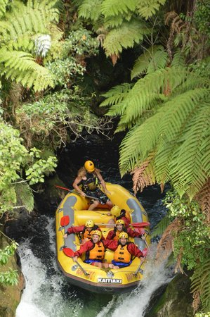 Kaitiaki Adventures: At the top and not scared at all??
