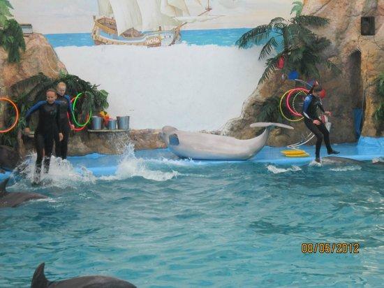 Odessa Delphinarium Nemo: белая афалина