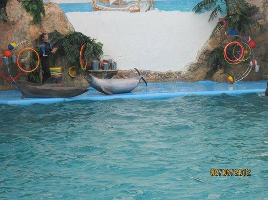 Odessa Delphinarium Nemo: трюки на берегу