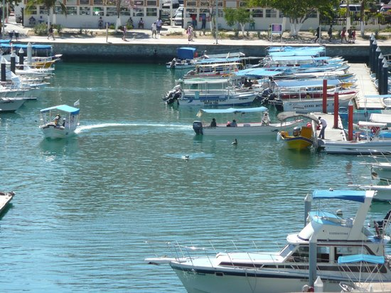 Tesoro Los Cabos: from our balcony, sea lions in marina