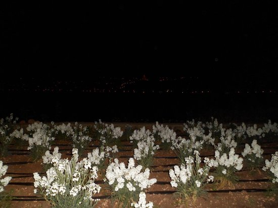 Mellieha Bay Hotel: vue de la baie de nuit
